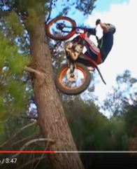 Trials motorcycle climbing a tree