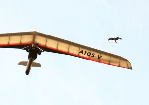 Hang glider flying next to a bird