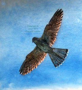 Soaring bird painting