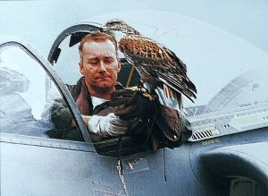 Rob S tries a bit of Falconry from the cockpit of his Sea Harrier at an air display