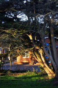 Trees and buildings at dawn in March 2020