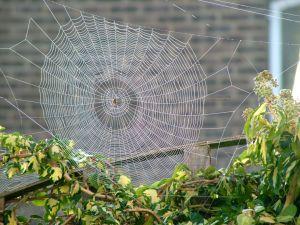 Cobweb in September 2009