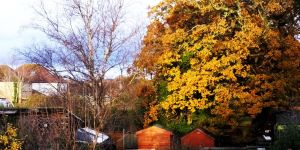 Trees and sheds at sunset in November 2019