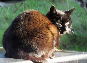 Sunlit cat in October 2019