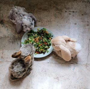 Bunny feeding time, August 2020