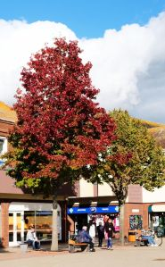 Colorful trees in Saxon Square, Christchurch, Dorset, UK