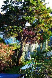 Morning light on garden, early October 2020