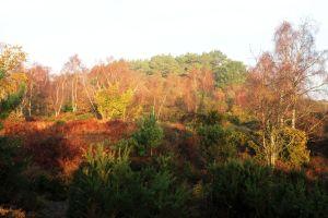 Autumn gold, St. Catherine's Hill, Christchurch, Dorset