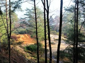 Disused quarry on St. Catherine's Hill, Christchurch, Dorset