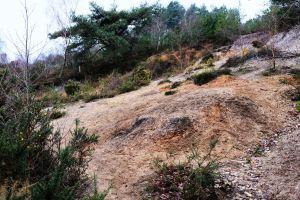 Old firing range slope, St. Catherine's Hill, Christchurch, Dorset