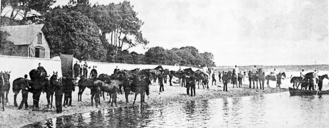 Ferrying horses over 'the run' at Sandhills in about 1900