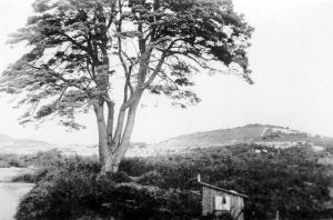 The hill from the intersection of The Grove with Fairmile Road in about 1900