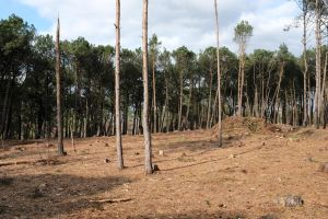Tree clearing in March 2021