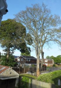 Dead tree next door